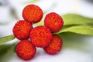 Corbezzolo - arbutus unedo l. - alberi da frutto 1