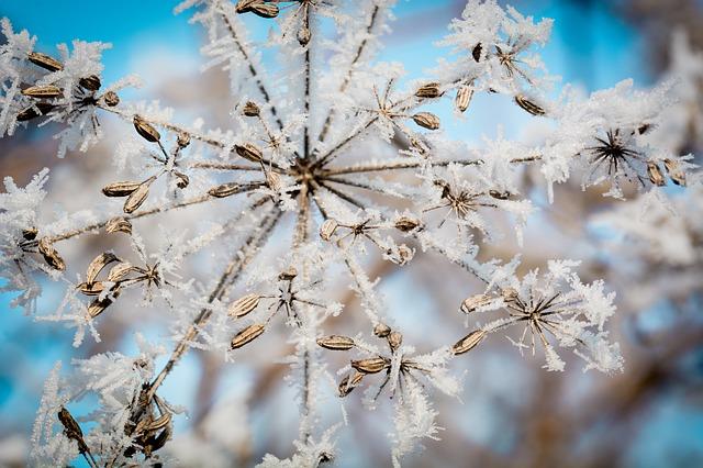 Le piante e il gelo come rimediare 2