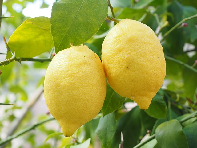 pianta limone