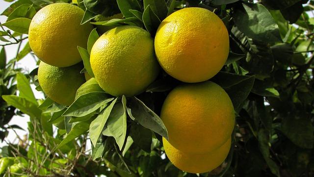 alberi da frutta