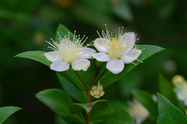 flower-1291003_640