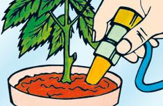 Blumat per piante domestiche, sistema d'irrigazione passiva per vasi 3