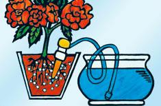 Blumat per piante domestiche, sistema d'irrigazione passiva per vasi 5