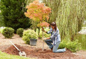 Preparazione del giardino per l'autunno 3