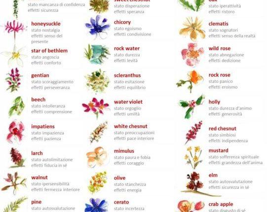 fiori-di-bach-ita