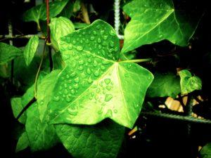 I segreti del pollice verde 4