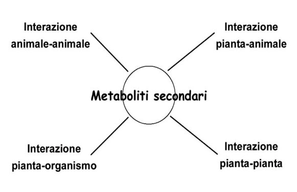 Fig. 1 - Schema di biosintesi dei principali metaboliti secondari.