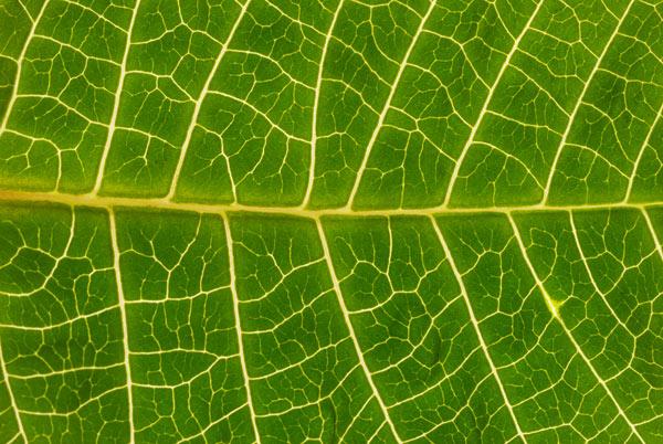 fotosintesi-clorofilliana